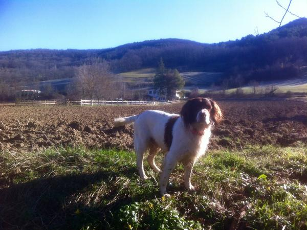 Dog sitting in the beautiful South of France