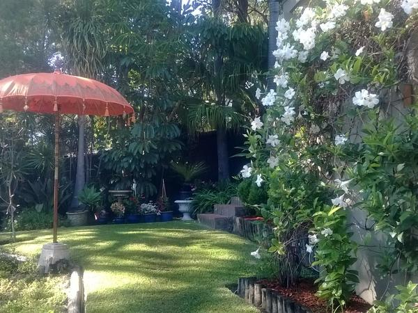 Housesitting assignment in Avalon, New South Wales, Australia