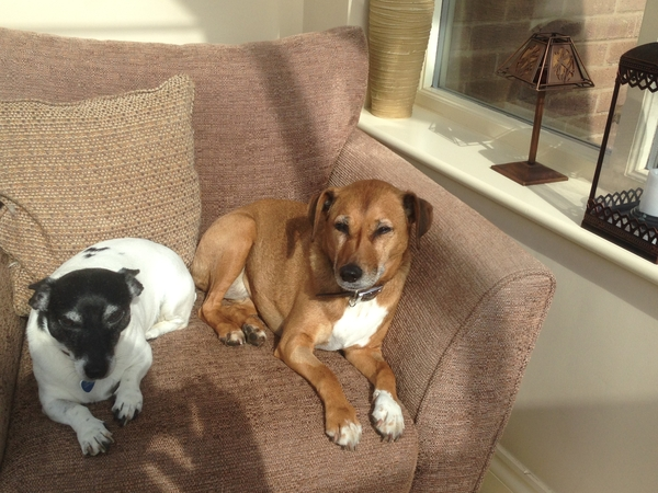 Sitter required for 4 Dogs - 2 Labs - Terriers