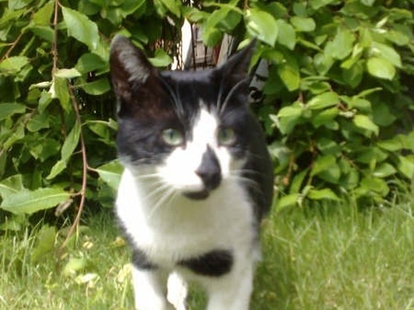 Cat Sitter Required for 2 weeks in September