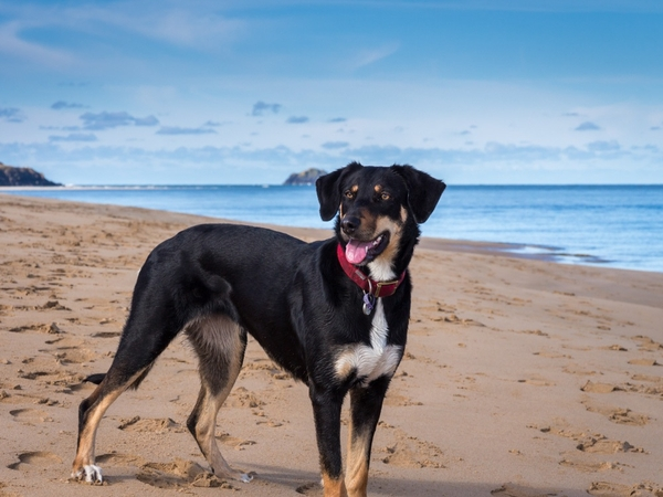 Sitter required for dog and old farmhouse on Devon Cornwall border
