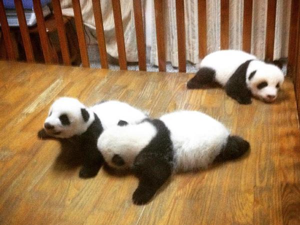Housesitting assignment in Chengdu, China