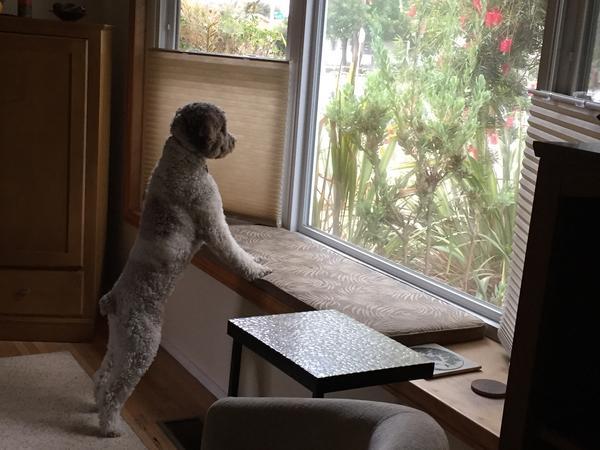 Housesitting assignment in Ventura, CA, United States