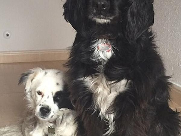 2 dogs and a house near Madrid looking for a sitter