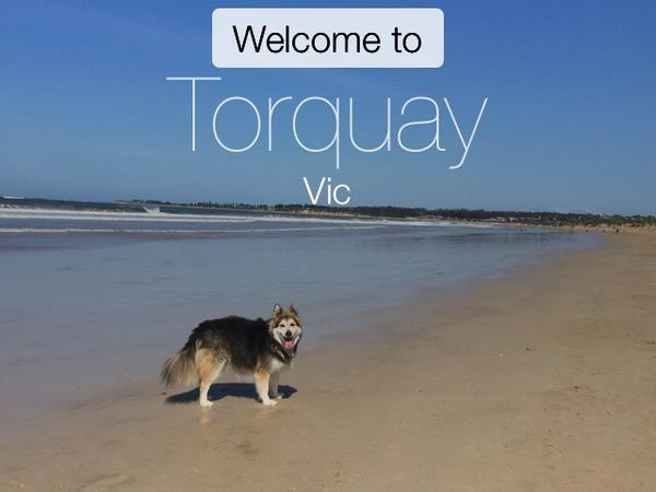 Housesitting assignment in Torquay, VIC, Australia