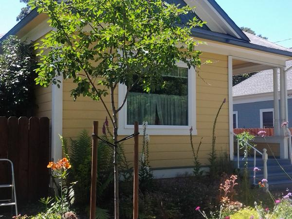 Wine country house sit, small house in Santa Rosa with lovable dog