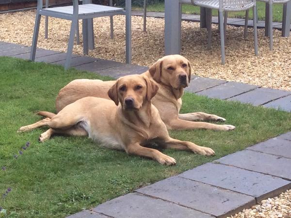 Pet sitter needed in Northamptonshire for 5/6 days