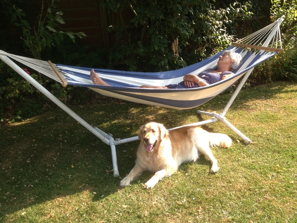 Pet sitter needed for one (rather gorgeous) Golden Retriever a week from 29th March 2017