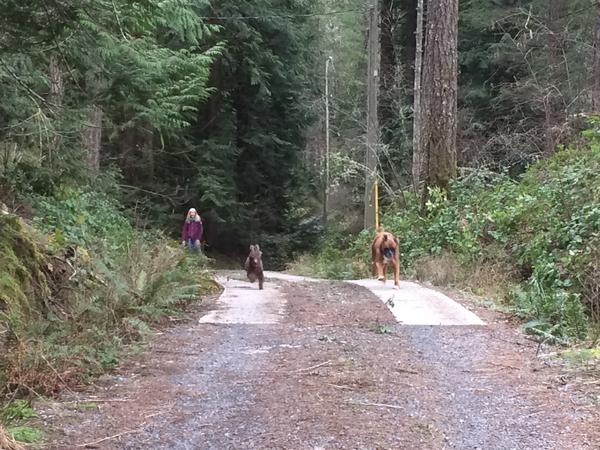 Pet sitting in the woods near Mount Work