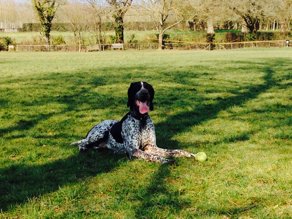 Housesitting assignment in Smarden, United Kingdom