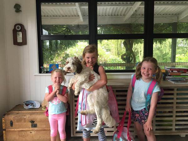 Looking for someone to give our dog, Daisy TLC, keep a basic eye on the birds and enjoy our home and our beautiful part of NZ