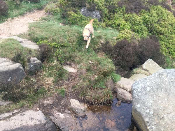 Housesitting assignment in Steeton, United Kingdom