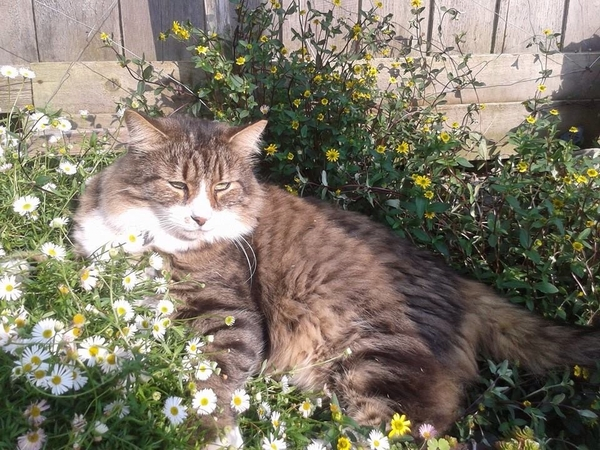 House and pet sitter needed in East Cowes in May 2016