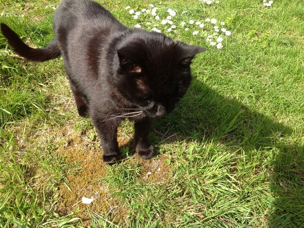 URGENT URGENT: House and cat sitter wanted (feb)