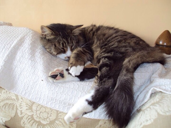 House/cat sitter required for 1 month over Christmas /new year on the beautiful Isle of Wight