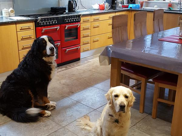 Benson says Hi !! We are looking for a kind and loving couple to look after our furry family of Benson, Willow, Sid and Diago in wonderful Wiltshire.