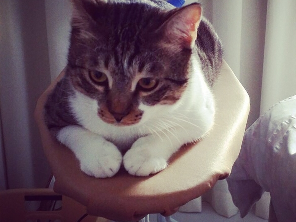Pet sitter needed for 2 Cats in Dubai, UAE.