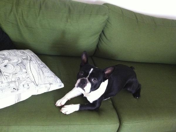 Pet - House sitter