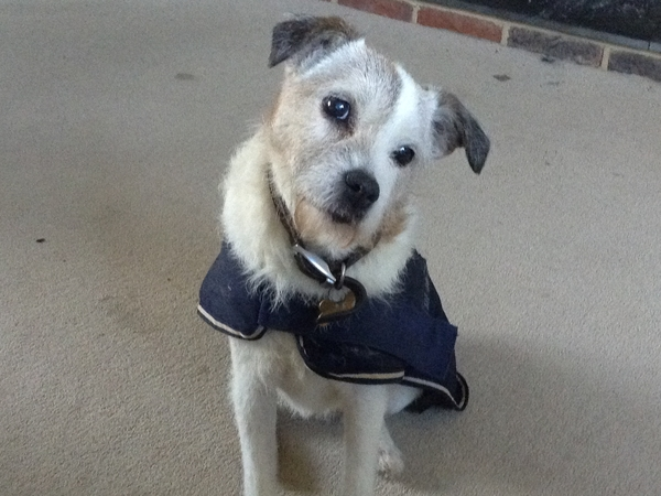 Pet sitter needed for our elderly terrier and pony 40mins south of Cambridge