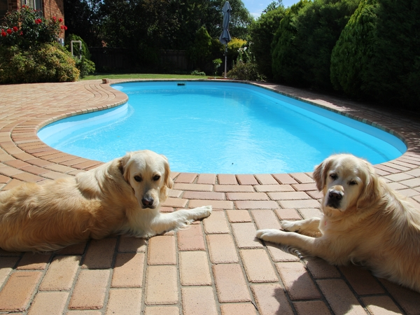 Pet sitter needed for our two Golden Retrievers while we travel to Europe to experience a White Christmas.