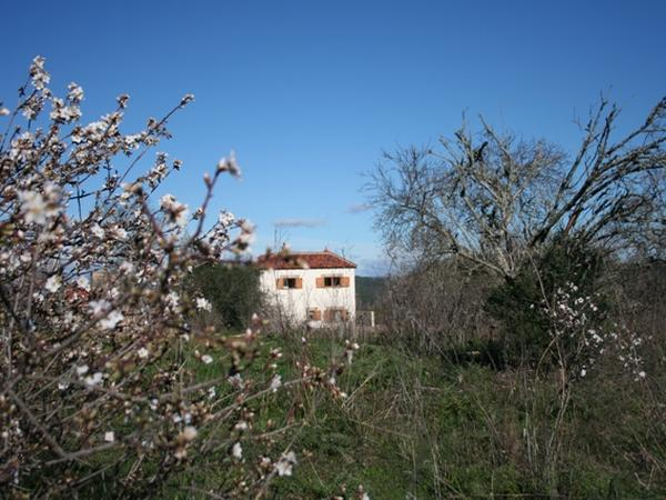 Housesitting assignment in São Bartolomeu de Messines, Portugal
