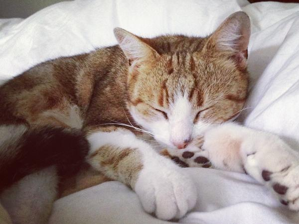 Spend a long weekend in London with our very affectionate rescue cat