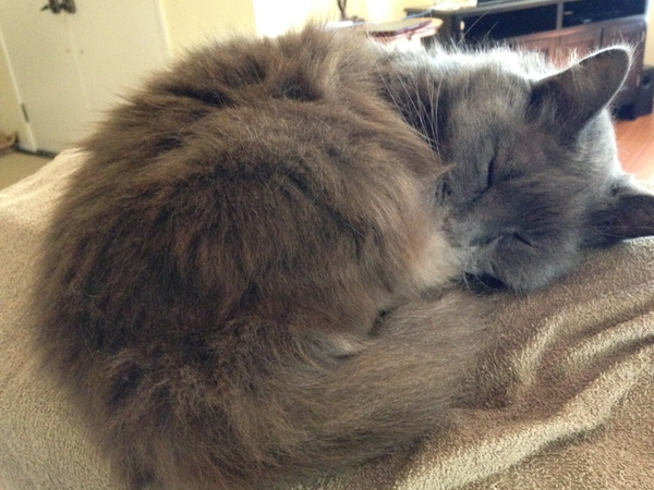 House & pet sitter needed for our 2 sweet cats in NorCal Suburbs (Orangevale - very close to the Folsom border & Old Town)