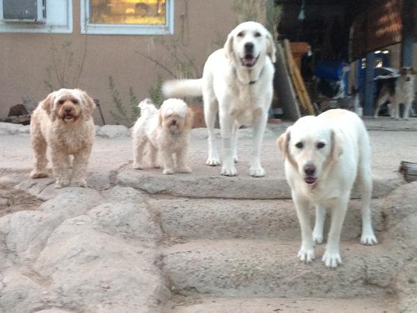 Housesitting assignment in Corrales, New Mexico, United States