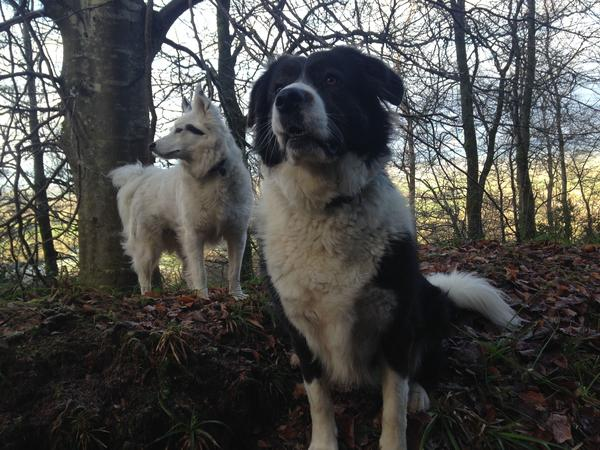 House&Pet sitters needed south central Ireland various dates