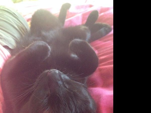 2-month summer house & cat sitter needed in Riverside, California (Jul 24 - Sep 20)