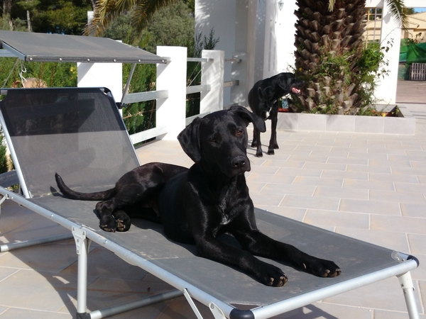 House and Pet sitter needed for our 2 dogs. Lilly and Costa  Our dates are flexible