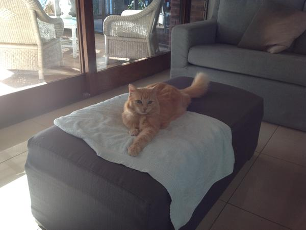 Housesitting assignment in Aalst, Netherlands