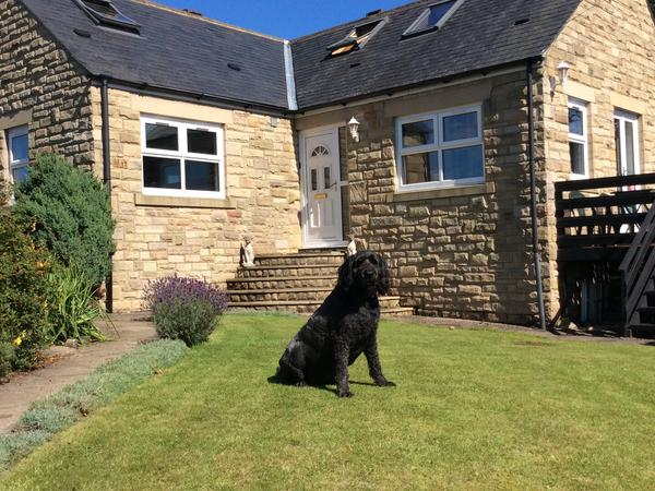 Pet sitter in rural location for easy going labradoodle