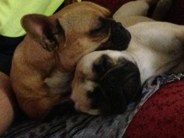 Pet & house sitter required January 2014 - Corrimal NSW