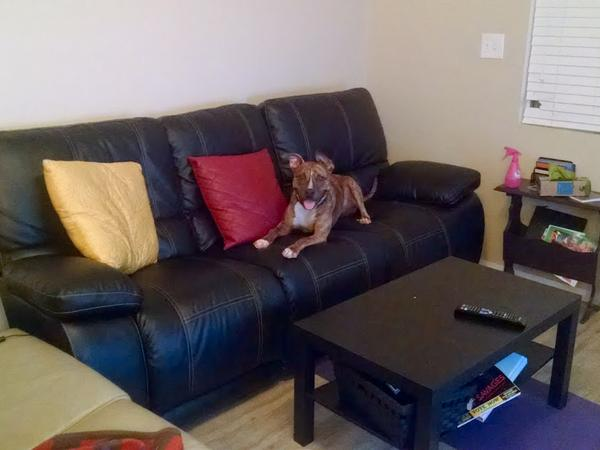 San Diego Dog Sitter Needed