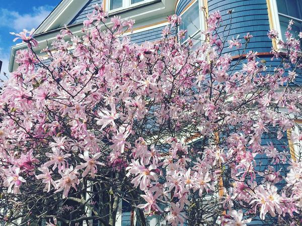 Housesitting assignment in Somerville, Massachusetts, United States