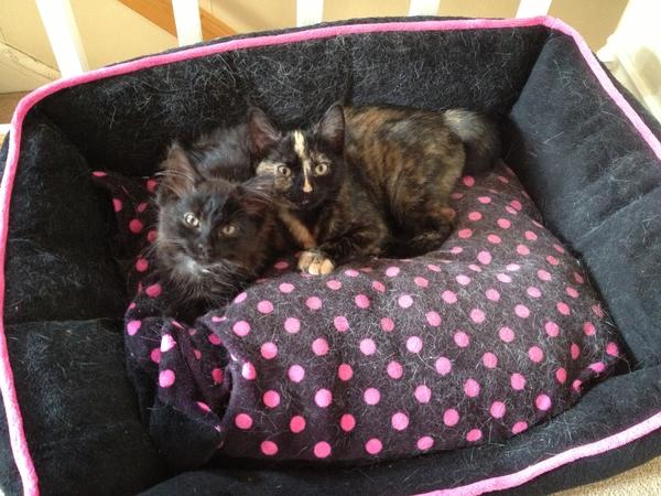 Dog/cat/housesitter needed in Honley, West Yorkshire