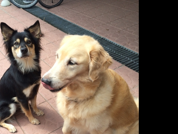 UK Bath - Two Dogs