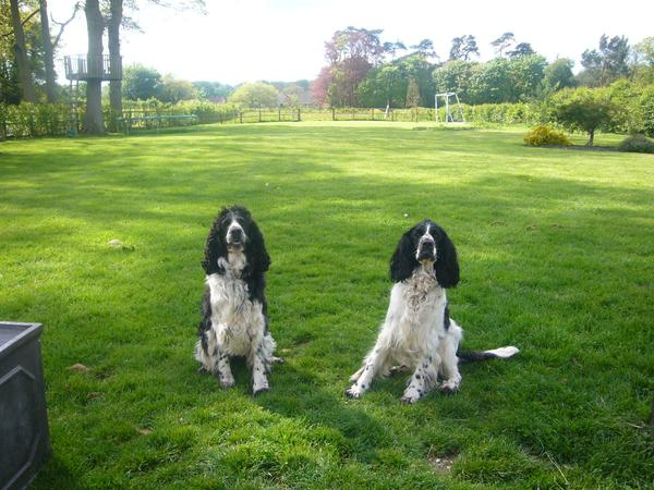House and pet sitter needed to look after our house, garden, dogs, cat and chickens near Newbury for one week in August.