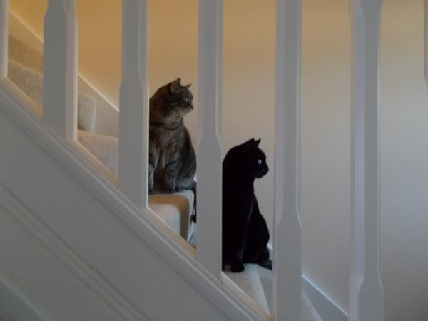 House and Cat Sitter required for 2 indoor cats (brother and sister) in Aberdeen