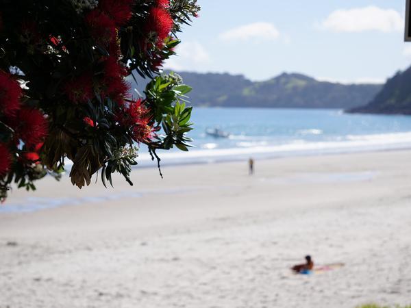House sitting on Onetangi Beach, Waiheke Island, New Zealand and loving 2 little dogs and 1 cat