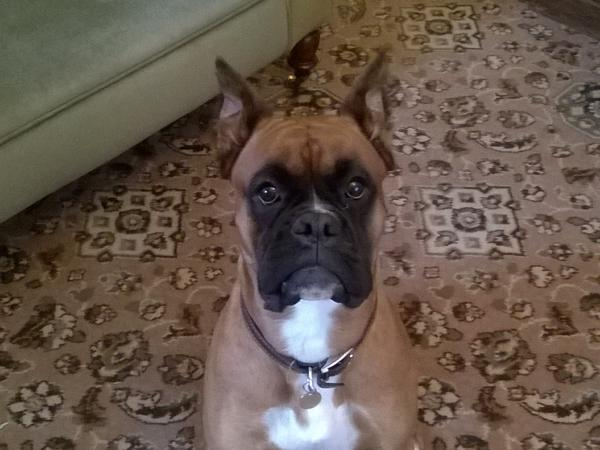 Housesitting assignment in Leicester, United Kingdom