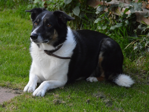 Pet sitter needed for our much loved pets Jasper (Border Collie age 7 yrs) Murphy (Cat age 6 yrs) and Bracken (House Cat age 5 yrs).