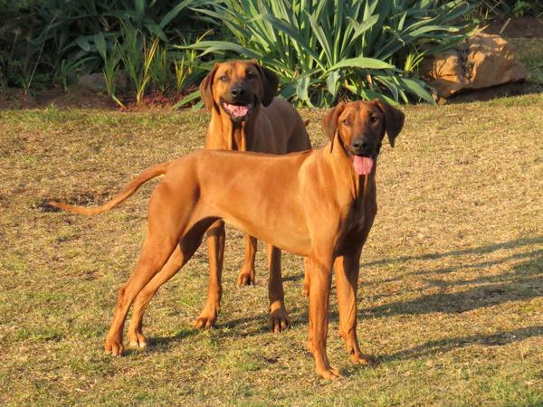 Housesitting assignment in Parkhurst, South Africa
