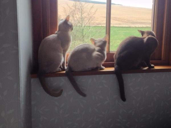 cat/house sitters