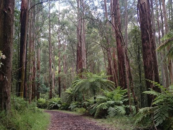 Housesitting assignment in Upwey, VIC, Australia