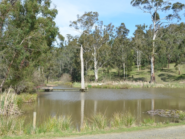 Housesitting assignment in Woori Yallock, Victoria, Australia