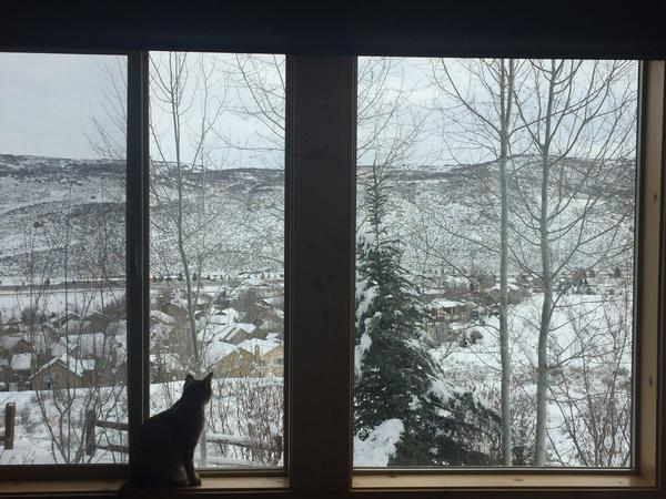 Housesitting assignment in Park City, Utah, United States