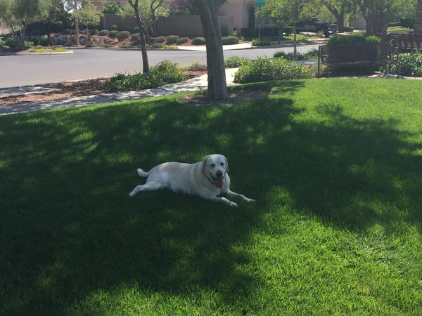 Housesitting assignment in Las Vegas, Nevada, United States