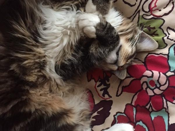Non-smoking pet sitters needed for 2 lovely cats in Oxford (Summertown), UK